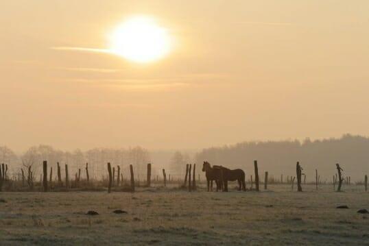 Im Bildungsurlaub Einführung in die pferdegestützte Therapie erfahren wir die positive Wirkung von Pferden