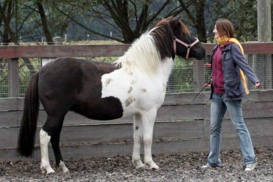 Im Bildungsurlaub arbeiten wir mit Pferden als Co-Trainerin