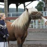 Azubicoaching-Pferde